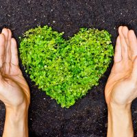 eco friendly green heart and hands